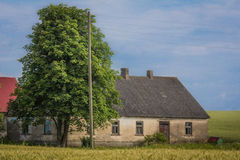 Δρύινο δέντρο στον τομέα σίτου εκτός από της παλαιάς σιταποθήκης στοκ φωτογραφίες με δικαίωμα ελεύθερης χρήσης