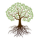 Δρύινο δέντρο χρώματος διανυσματική απεικόνιση