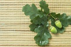 Δρύινο βελανίδι με τα πράσινα φύλλα Στοκ Εικόνες