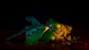 Δρύινο βελανίδι Στοκ Φωτογραφίες