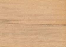 δρύινο δάσος σύστασης Στοκ Φωτογραφία