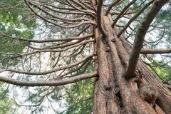Δρύινο δέντρο κάτω από την άποψη ενάντια στον ουρανό στοκ εικόνα με δικαίωμα ελεύθερης χρήσης