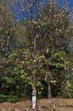 δρύινο δέντρο κοριτσιών κάτ& Στοκ εικόνες με δικαίωμα ελεύθερης χρήσης