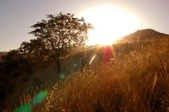 δρύινο δέντρο πνευμάτων Στοκ Φωτογραφίες