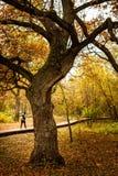 Δρύινο δέντρο σε ένα πάρκο φθινοπώρου Στοκ Εικόνα
