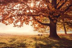 Δρύινο δέντρο στο δασικό ξέφωτο Στοκ φωτογραφία με δικαίωμα ελεύθερης χρήσης