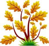 δρύινο δέντρο φύλλων εικο Στοκ εικόνα με δικαίωμα ελεύθερης χρήσης
