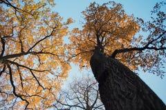 δρύινο δέντρων υπόβαθρο κινηματογραφήσεων σε πρώτο πλάνο φύλλων κλάδων πορτοκαλί bokeh υπαίθριο στοκ φωτογραφίες
