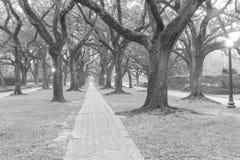 Δρύινο ομιχλώδες πρωί Χιούστον, Τέξας, ΗΠΑ σηράγγων δέντρων Ο Μαύρος και whi Στοκ Φωτογραφίες