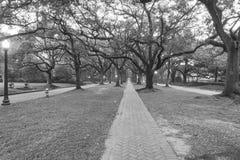 Δρύινο ομιχλώδες πρωί Χιούστον, Τέξας, ΗΠΑ σηράγγων δέντρων Ο Μαύρος και whi Στοκ Εικόνες