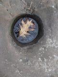Δρύινο φύλλο στο νερό Στοκ εικόνα με δικαίωμα ελεύθερης χρήσης