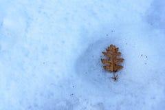 Δρύινο φύλλο στο χιόνι Στοκ Φωτογραφίες