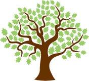 Δρύινο φύλλο σφενδάμου δέντρων Στοκ Εικόνες