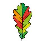 Δρύινο φύλλο Στοκ φωτογραφία με δικαίωμα ελεύθερης χρήσης