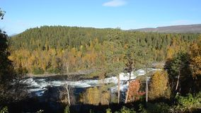 Δυνατός καταρράκτης ποταμών βρυχηθμού με το ζωηρόχρωμο δασικό υπόβαθρο απόθεμα βίντεο