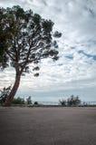 Δυνατό δέντρο που στέκεται μόνο στοκ εικόνες με δικαίωμα ελεύθερης χρήσης