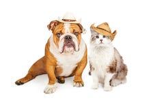 Δυτικά γάτα και σκυλί κάουμποϋ Στοκ Εικόνες