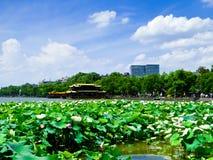 Δυτική λίμνη των λουλουδιών λωτού Hangzhou Στοκ Φωτογραφίες