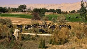 Δυτική όαση ερήμων Kharga, Αίγυπτος Στοκ φωτογραφία με δικαίωμα ελεύθερης χρήσης