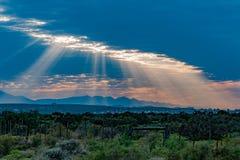 Δυτικό ακρωτήριο Νότια Αφρική Oudtshoorn Στοκ φωτογραφίες με δικαίωμα ελεύθερης χρήσης