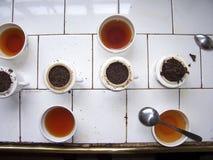 Δωμάτιο δοκιμής τσαγιού σε μια φυτεία τσαγιού στη Σρι Λάνκα στοκ εικόνες