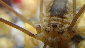 Δόνηση   Αράχνη στοκ εικόνες