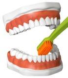 Δόντια και οδοντόβουρτσα Στοκ εικόνα με δικαίωμα ελεύθερης χρήσης
