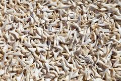 δόντια καρχαριών πώλησης τι& Στοκ Εικόνες