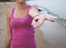 Δόντι καρχαριών Στοκ εικόνες με δικαίωμα ελεύθερης χρήσης