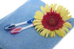 δόντι λουλουδιών βουρτ& Στοκ Εικόνες