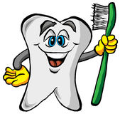 Δόντι που κρατά μια οδοντόβουρτσα Στοκ φωτογραφία με δικαίωμα ελεύθερης χρήσης