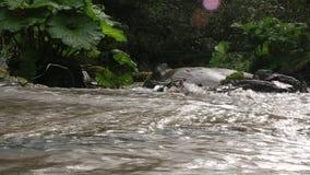 Δύναμη της κάμψης ρευμάτων ποταμών Chvizepse βουνών το φθινόπωρο, burdock, Medoveevka φιλμ μικρού μήκους