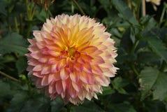 Δύναμη του λουλουδιού Στοκ Φωτογραφίες