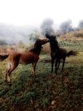 Δύο άγρια άλογα στοκ φωτογραφίες με δικαίωμα ελεύθερης χρήσης