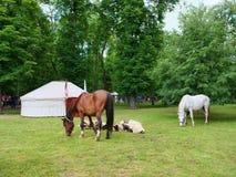 Δύο άλογα βόσκουν στο πάρκο στοκ φωτογραφία