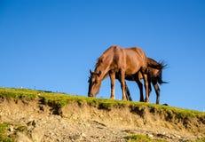 Δύο άλογα στα βουνά Στοκ Φωτογραφίες