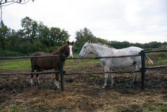 Δύο άλογα, δύο χρώματα στοκ εικόνα
