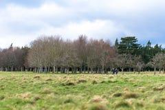 Δύο άνθρωποι που περπατούν σε ένα πάρκο σε μια ηλιόλουστη ημέρα στοκ φωτογραφία