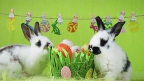Δύο άσπρα κουνέλια Πάσχας με τα μαύρα αυτιά φιλμ μικρού μήκους