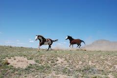 Δύο άλογα χρωμάτων που τρέχουν στην κορυφογραμμή που κλωτσά επάνω τη σκόνη Στοκ φωτογραφία με δικαίωμα ελεύθερης χρήσης