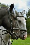 Δύο άλογα Στοκ Φωτογραφία