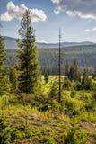 Δύο δέντρα - η διαβίωση και οι νεκροί Στοκ φωτογραφίες με δικαίωμα ελεύθερης χρήσης