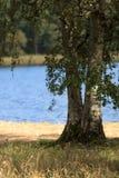 Δύο δέντρα μπροστά από την μπλε λίμνη Στοκ εικόνες με δικαίωμα ελεύθερης χρήσης