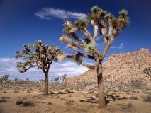 Δύο δέντρα του Joshua Στοκ φωτογραφία με δικαίωμα ελεύθερης χρήσης