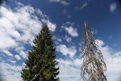Διαβίωση και νεκρό δέντρο Στοκ φωτογραφία με δικαίωμα ελεύθερης χρήσης