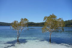 Δύο δέντρα Στοκ φωτογραφία με δικαίωμα ελεύθερης χρήσης