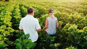 Δύο αγρότες - ένας άνδρας και μια γυναίκα που περπατούν κατά μήκος του πράσινου τομέα ενός ηλίανθου, επικοινωνούν Σε χρήση εργασί απόθεμα βίντεο