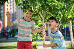 Δύο αγόρια παίζουν κοντά στα παιδιά οφθαλμών δέντρων σημύδων έχουν την αλλεργία στο ανθίζοντας δέντρο Έννοια υγειονομικής περίθαλ στοκ εικόνες με δικαίωμα ελεύθερης χρήσης