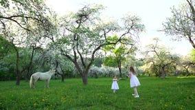 Δύο αδελφές στο άσπρο παιχνίδι φορεμάτων στο ανθίζοντας δέντρο άνοιξη καλλιεργούν με τη σφαίρα απόθεμα βίντεο