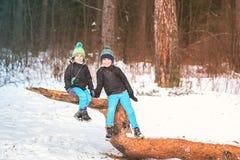 Δύο αδελφοί στο χειμερινό δάσος που αναρριχείται σε ένα δέντρο στοκ εικόνα